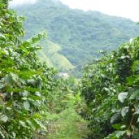 Caffè Arabica 100%... un mondo intero celato dietro questa dicitura! Parte Seconda