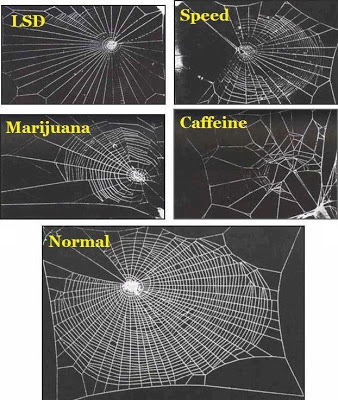 caffeina ragni