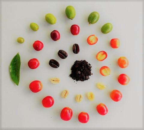 frutto coffee