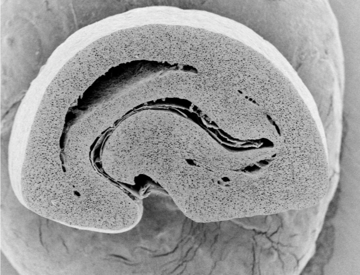 _coffee bean microscope cross section
